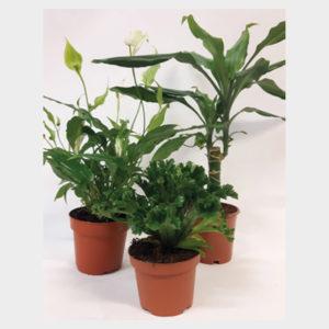 Mästers Gröna växter